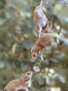 funny animal pics hamsters hanging and in love giving flower cute