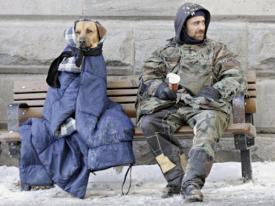 really cold dogs photos rugged up on a bench funny animal pics