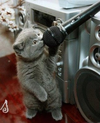 funny animal pics grey cat singing into microphone maybe karaoke