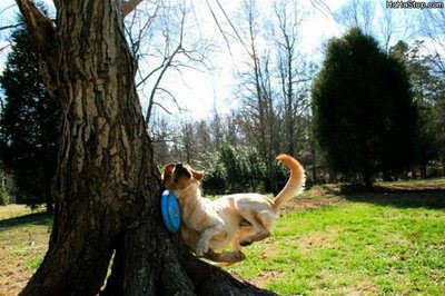 funny animal photos dog runs into tree while playing frisbee nasty accident