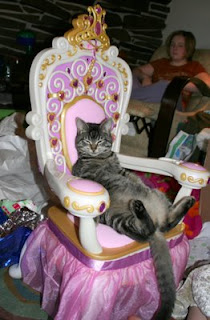 really funny photo of queen cat sitting on her throne