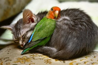 funny parrot and cat animal photo as friends but cat is sleeping