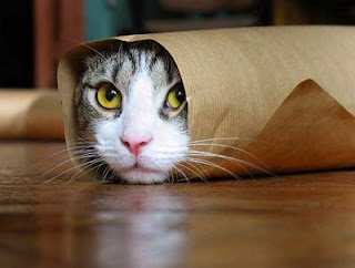 funny cat photos wrapped up in brown paper