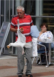 funny seagul picture stealing ice cream out of mans hand