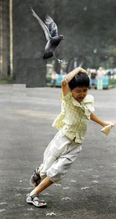 amazing funny bird photo pigeon attacking child with bird food