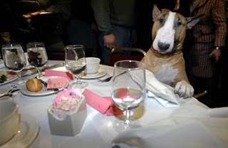 funny dog photos sitting at the dinner table posing for pic