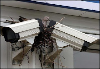 funny animal pictures pigeon nesting between two cctv cameras
