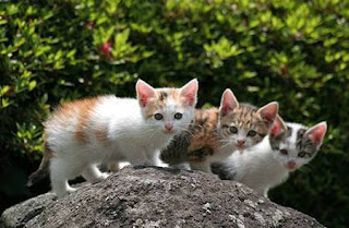 funny animal photos three really cute kittens posing on a rock for a picture