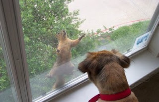 funny squirrel photo looking through window while dog watches from inside