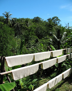 Rubbr drying in the sun, Karon, Phuket