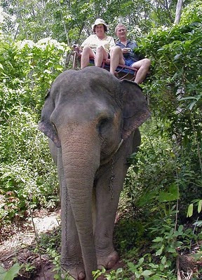 Elephant Ride in Phuket