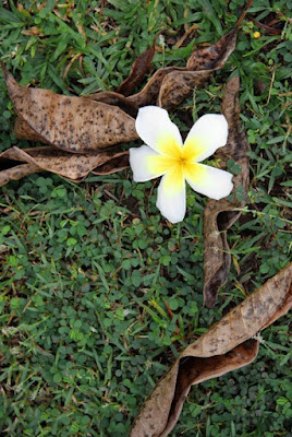 Fallen leaves and Leelawadee flower