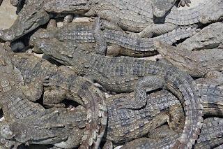 Crocodile farm in Phuket Town
