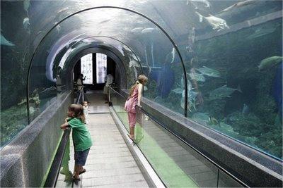 My kids at Phuket Aquarium
