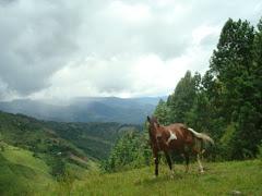 Valle de Rio Negro
