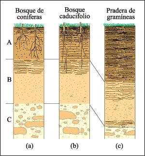 Analisis de suelos tipos de suelos for Suelos y tipos de suelos