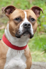 Saucy Was Adopted 3/25