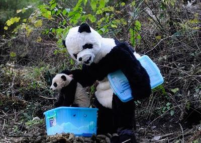 cientifico disfraz panda