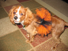 Even dogs can wear tutus!!