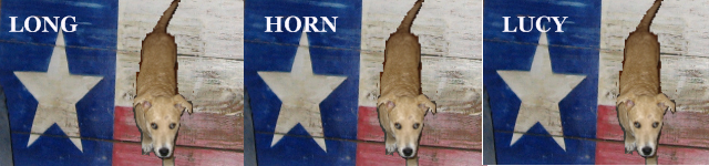 Longhorn Lucy