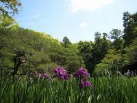 Heian-jingu garden FREE opening!