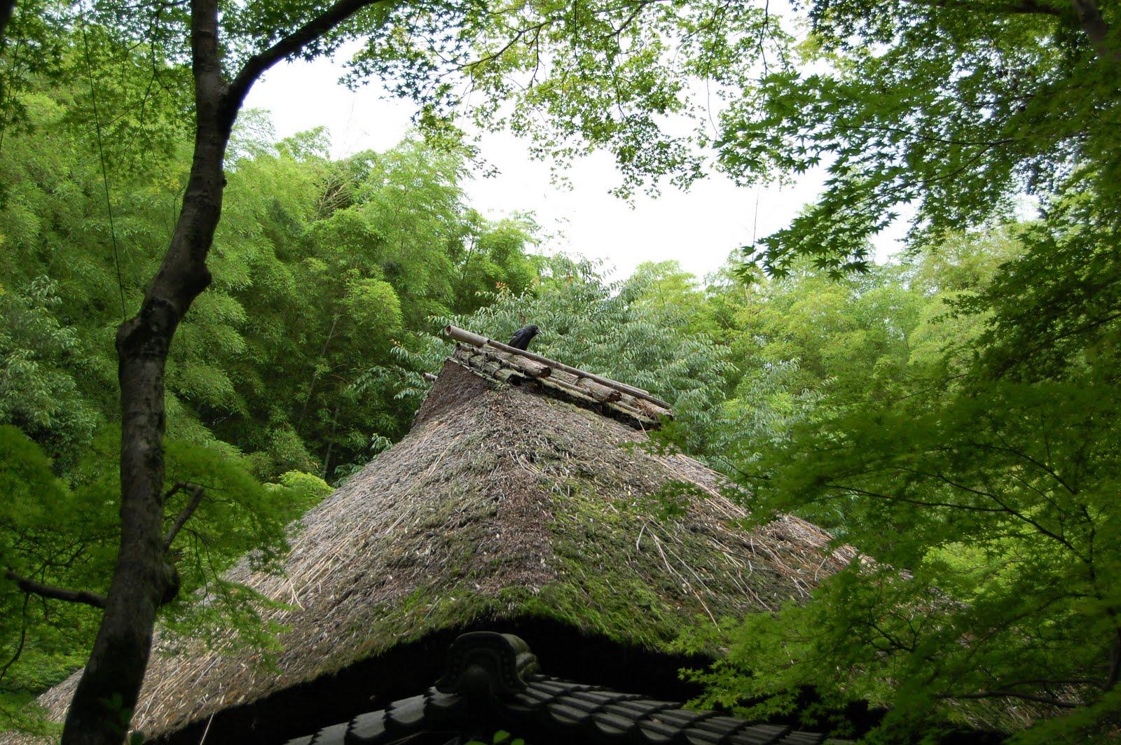 Gtk Green Tour Kyoto The Best Moss Garden In Kyoto