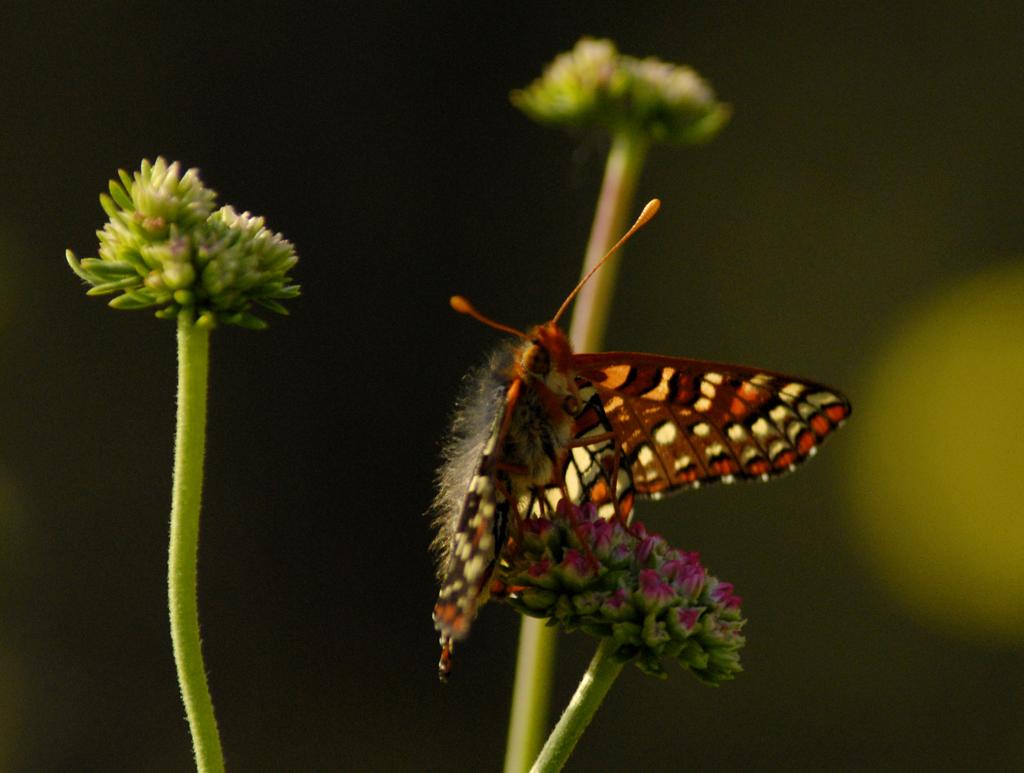 http://4.bp.blogspot.com/_BhRumUqjdYg/TUejIUPqArI/AAAAAAAAAQA/jO2t9S7qROY/s1600/flowers-butterfly-pictures-wallpapers.jpg