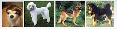 Information on Dog Breeds