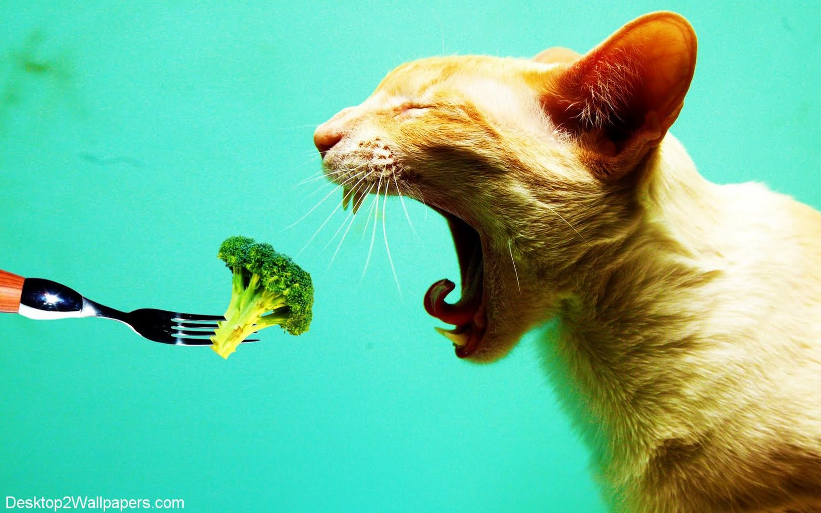 funny animals wallpapers cats - photo #42