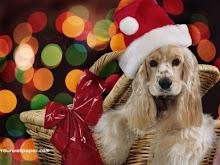 ¡Piensa antes de regalar! Muchos de los que somos abandonados fuimos lindos regalos
