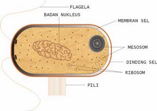 Mikroba sangatlah penting dising sebagai penyusun utama mikroba
