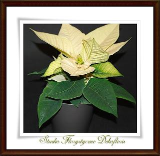 dekoracje kwiatowe opolskie