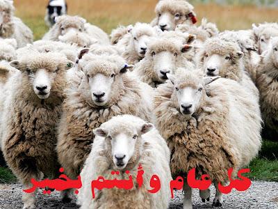خروف-عيد-الأضحى-الأضحية-خرفان-ذبح