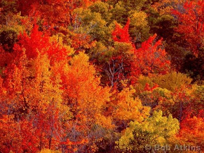 Http://www.bobatkins.com/photography/Gallery/RFS/slides/fall_foliage_TEMP0465.JPG