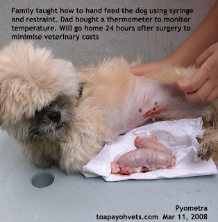 How Long Can A Dog Eat Before Spayed