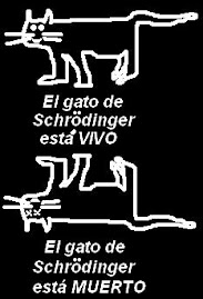 El gato