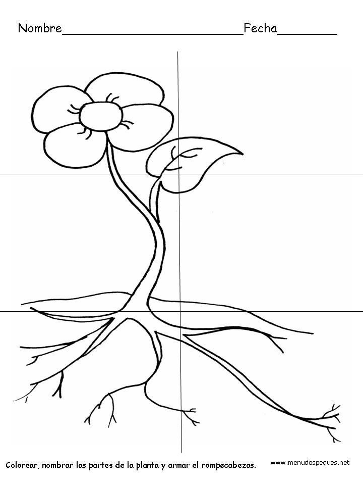 Mis preescolares: La planta y sus partes