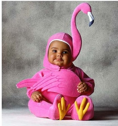 Cute baby like flamingo dressing picture