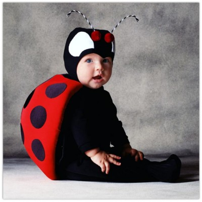 Cute baby like insect dressing picture
