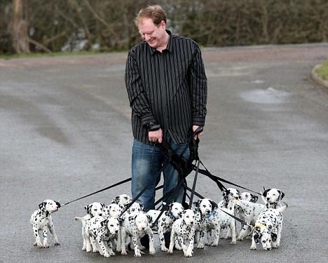 http://4.bp.blogspot.com/_BoqsMMSqtoo/TJ8CBvtLP9I/AAAAAAAACik/vdsk2awxAp8/s640/18-dalmatian-puppies-.jpg