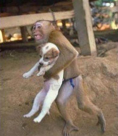 Могут ли животные любить? Monkey+puppy