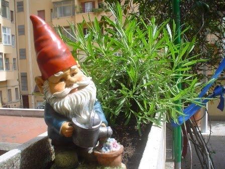 Qualcosa di me i nani da giardino - Alberi nani da giardino ...