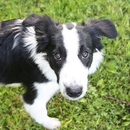 Zulu Puppy Pic