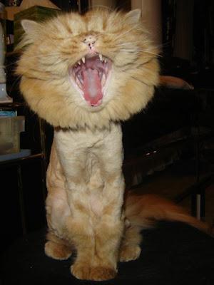 kucing - LawakJenaka.com