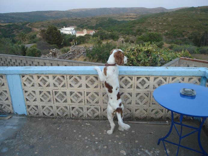 O σκυλάκος μου ο Willy