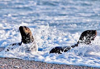photo sea lions
