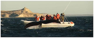 Whale watching in Patagonia Argentina