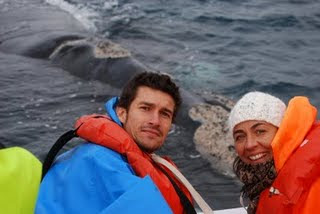 Our Guest Whales watching