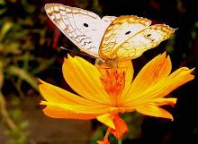 O jardim ,a rosa e a borboleta