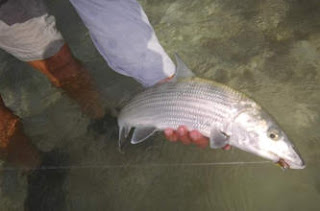 Photo of guest holding a bonefish